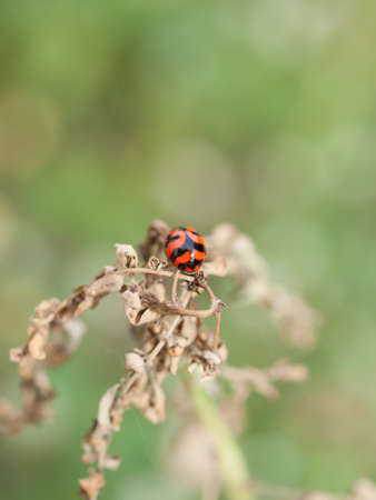 Ladybug and small grass flowers Stock Photo - 18129938