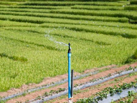 Water uit sprinkler in planten