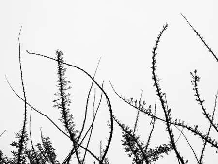blad abstracte met een witte achtergrond