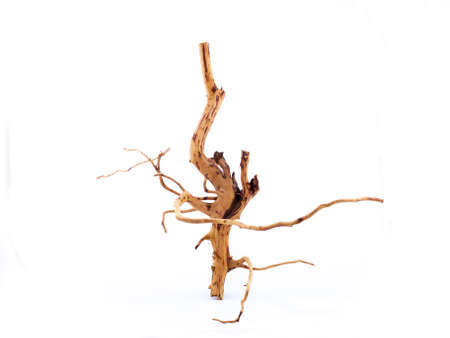 Dried branch on white background