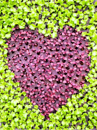heart shape form by various vegetables Stock Photo
