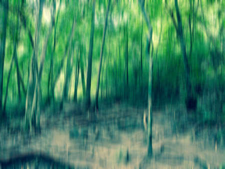 forest motion blur abstract background photo