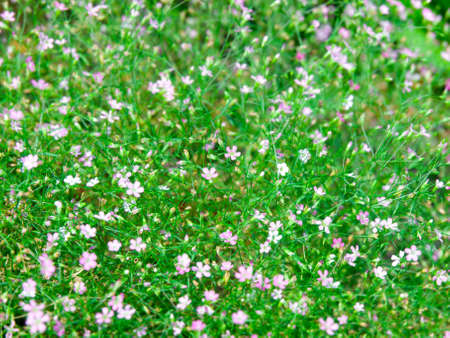 Close up of Baby's Breath Flower Background Stock Photo - 24227435