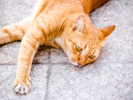 red cat laying on floor