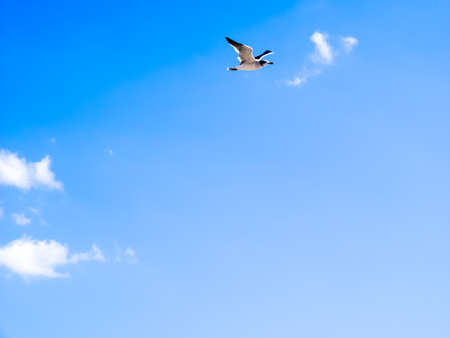 blue bird: seagull flying in the blue sky Stock Photo