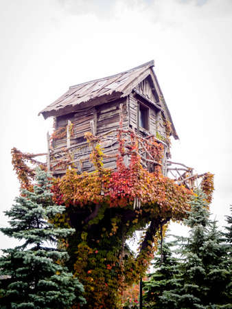 Small house on a tree in autumn season