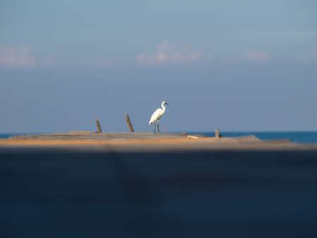 bird is standing on the bridge background