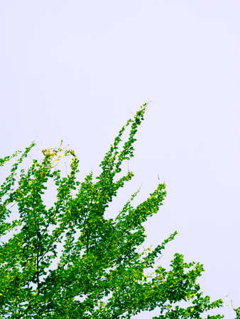 Green leaves abstract nature background Stock Photo