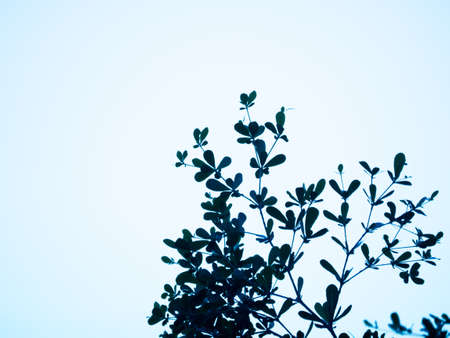abstract leaf silhouette nature background