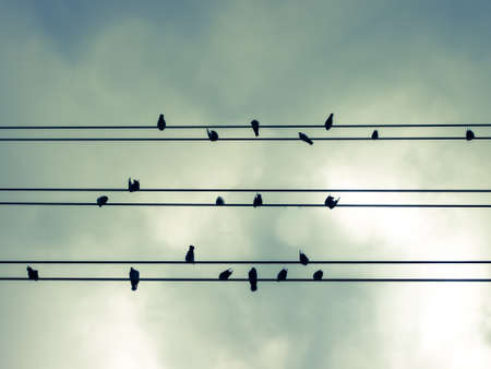 lined up: Birds lined up on electric lines Stock Photo
