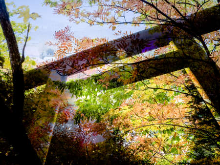 Double exposure Torii gate with autumn background