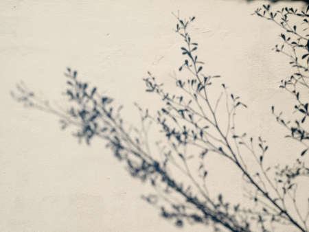 tree shadow on the white wall pattern abstract background Stock Photo