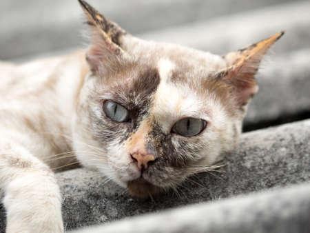 close up: close up brown cat looking