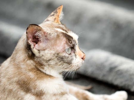 close up brown cat looking