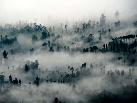 foggy morning in a forest abstract background