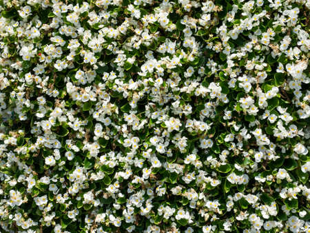 abstract white flower pattern backgrounds