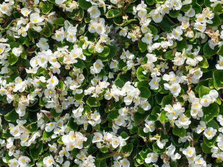 close up white flower pattern background