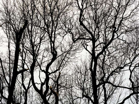 Tree branches abstract nature background