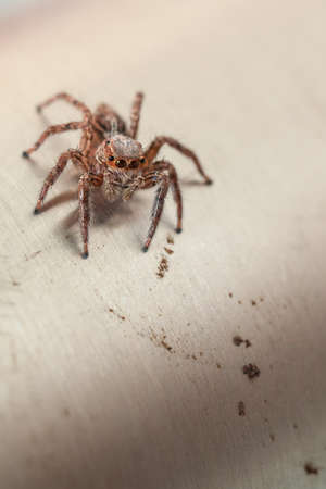 close up jumping spider insect nature background Stock fotó