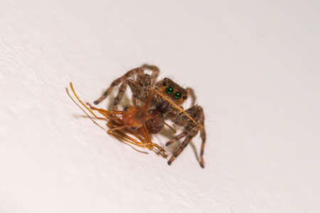 close up jumping spider macro  insect nature background