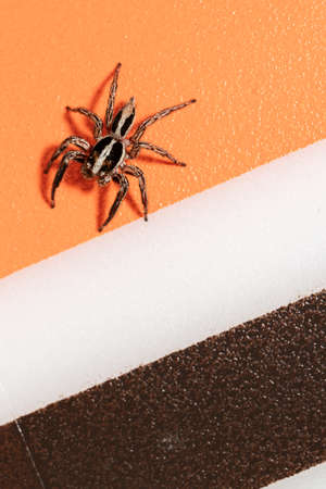 close up of jumping spider on colorful background