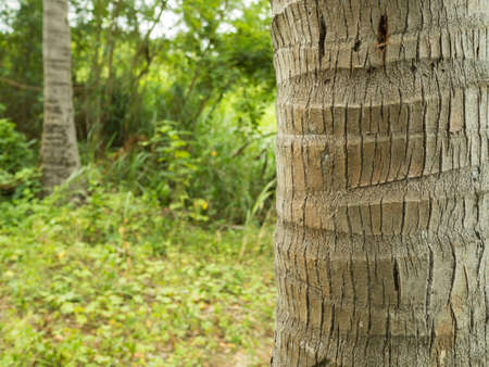 tropical tree: coconut tree and grass background Stock Photo