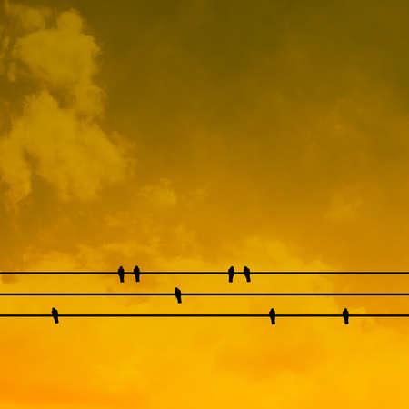 Schatten Vögel Auf Kabel Linie Silhouette Blur Sky Ton Lizenzfreie ...