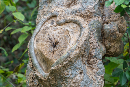 Heart carved on tree bark. Natural Valentines day background.