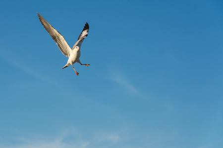 vigilance: Seagull flying in blue sky Stock Photo