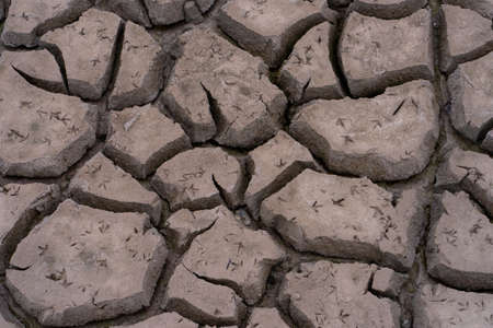 Footprints of birds on dry mud.
