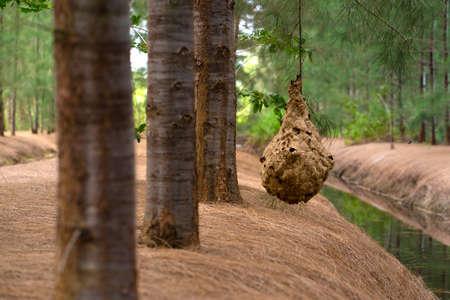 Wasp nest on tree