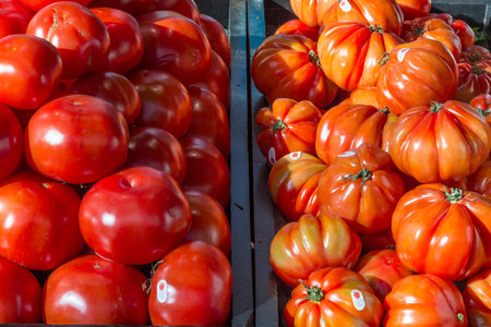 Normal tomatoes next to beefsteak tomatoes
