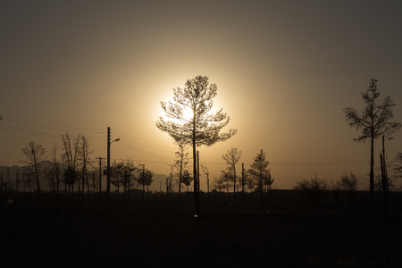 growth hot: Silouhette of a young tree into the sunset light, Isfahan, Iran Picture of a very young pine, surrounded by other young tree and powerlines in the outskirts of Isfahan, Iran Stock Photo