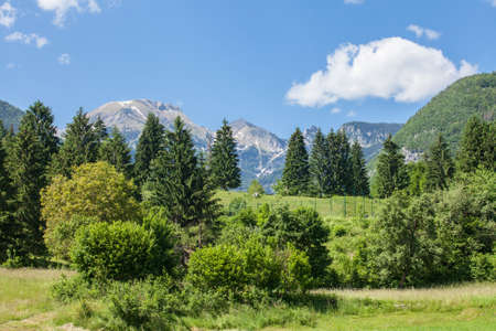 Triglav, Mali Draski, Tosc and Skrlatica mounts in the Julian Alps, in Slovenia, by Bohinj, surrounded by a forest, in summer. Triglav vrh is the highest peak and mountain of Slovenia.
