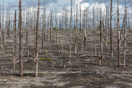 Lifeless desert landscape of Kamchatka: Dead wood Tolbachik Volcano lava field. Far East Russia Kamchatka Peninsula. Stockfoto