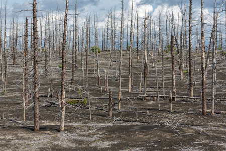 Lifeless desert landscape of Kamchatka: Dead wood Tolbachik Volcano lava field. Far East Russia Kamchatka Peninsula. Фото со стока