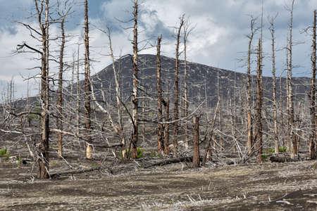 lifeless: Lifeless desert landscape of Kamchatka Peninsula: Dead wood Tolbachik Volcano lava field. Far East Russia Kamchatka. Stock Photo