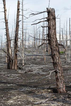 lifeless: Lifeless desert landscape of Kamchatka: Dead wood Tolbachik Volcano lava field. Far East Russia Kamchatka Peninsula. Stock Photo