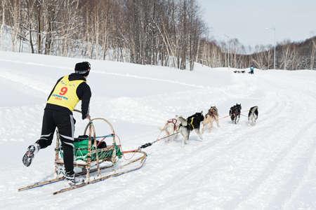 mushing: PETROPAVLOVSK-KAMCHATSKY, KAMCHATKA, RUSSIA - MARCH 2, 2014: Running sled dog team Kamchatka musher Dmitry Revenok. Kamchatka Dog Sled Racing Beringia. Race-prologue, distance of 10 kilometers. Editorial