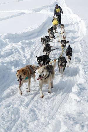 mushing: KAMCHATKA, RUSSIA - MARCH 3, 2014: Traditional Kamchatka Dog Sledge Racing Beringia. Russian Federation, Far East, Kamchatka Peninsula.