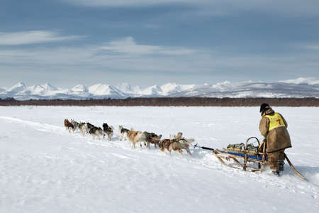 KAMCHATKA, RUSSIA - MARCH 3, 2014: Traditional Kamchatka Sled Dog Racing Beringia. Russian Federation, Far East, Kamchatka Peninsula.