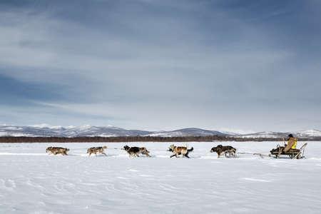 KAMCHATKA, RUSSIA - MARCH 3, 2014: Traditional Kamchatka Dog Sledge Race Beringia. Russian Federation, Far East, Kamchatka Peninsula. Redactioneel