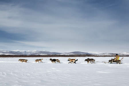 KAMCHATKA, RUSSIA - MARCH 3, 2014: Traditional Kamchatka Dog Sledge Race Beringia. Russian Federation, Far East, Kamchatka Peninsula. Редакционное