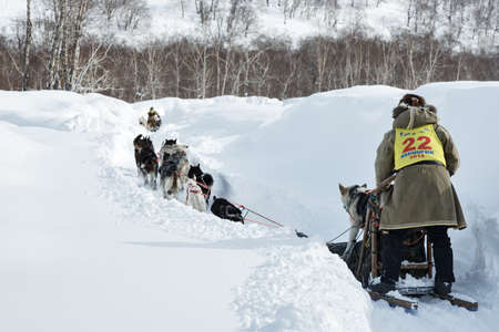 mushing: KAMCHATKA, RUSSIAN FEDERATION - MARCH 3, 2014: Traditional Kamchatka Sled Dog Race Beringia. Russia, Far East, Kamchatka Peninsula.