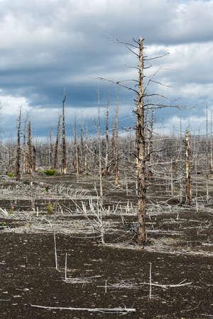 lava field: Lifeless desert landscape of Kamchatka: Dead wood (Tolbachik Volcano lava field). Far East, Russia, Kamchatka Peninsula.