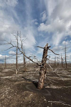 lava field: Lifeless desert landscape of Kamchatka: Dead wood Tolbachik Volcano lava field. Far East Russia Kamchatka Peninsula. Stock Photo