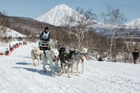 lejano oriente: KAMCHATKA, Yelizovo LA CIUDAD, Rusia - MAR 2, 2013: Perro de trineo Racing Kamchatka Yelizovsky sprint. equipo de perros se est� ejecutando en pistas cubiertas de nieve en el fondo de los volcanes. Federaci�n de Rusia, Lejano Oriente, Kamchatka.
