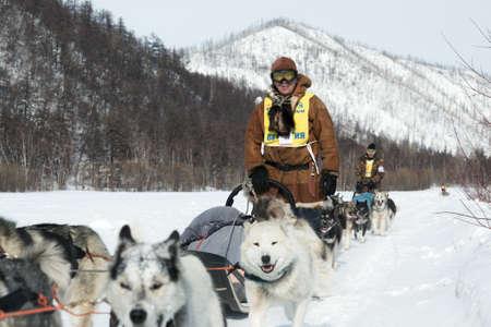 to go sledding: KAMCHATKA, RUSSIA - MARCH 9, 2013: Running dog sledge team Kamchatka musher Nikolay Levkovsky. Traditional Kamchatka extreme Sled Dog Racing Beringia. Russian Federation, Far East, Kamchatka Peninsula. Editorial
