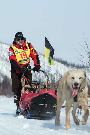 to go sledding: KAMCHATKA, RUSSIA - MARCH 9, 2013: Running dog sledge team Kamchatka musher Revenok Vladislav. Traditional Kamchatka extreme Sled Dog Racing Beringia. Russian Federation, Far East, Kamchatka Peninsula.