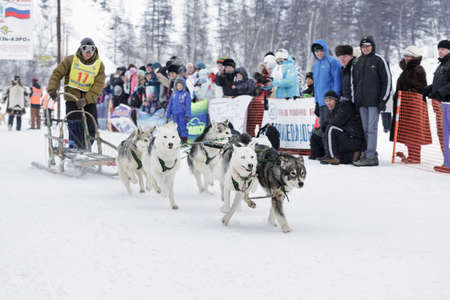to go sledding: ESSO VILLAGE, KAMCHATKA, RUSSIA - MARCH 8, 2013: Running dog sledge team Kamchatka musher Chuprin Alexander. Kamchatka extreme Dog Sledge Racing Beringia. Eurasia, Russian Far East, Kamchatsky Krai, Bystrinsky Region, Esso Village.